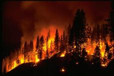 05_22_2013_forest-fire