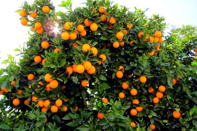 orange-county-1