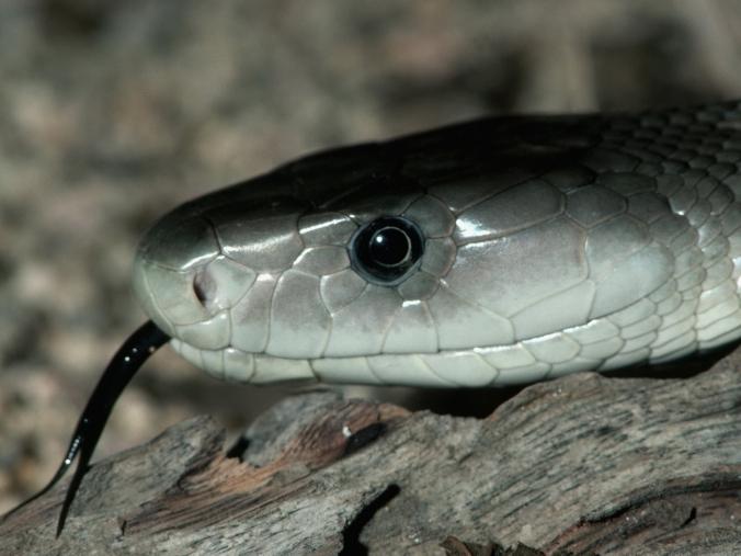 snake pics (22)
